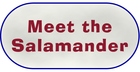 Meet the Salamander
